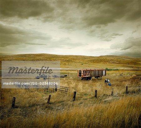 Horse in Field, Sand Hills, Nebraska, USA