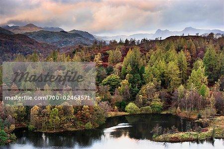 Autumn, Tarn Hows, Lake District,Cumbria, England