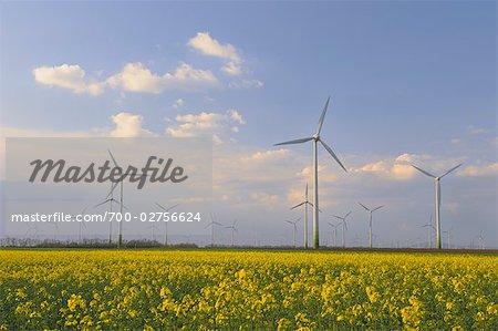 Wind Farm and Canola Field, Burgenland, Austria