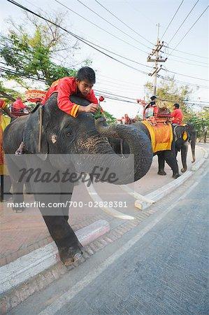 A Mahout Giving a Rose to His Elephant, Ayutthaya Historical Park, Ayutthaya, Thailand
