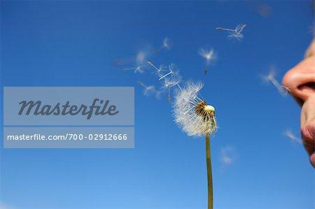 Man Blowing on Dandelion