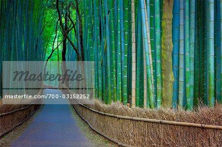Bamboo Lined Pathway at Dusk, Kyoto, Japan