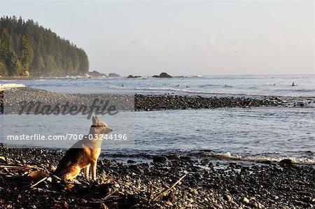 Dog on Sombrio Beach, Juan de Fuca Provincial Park