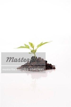 Still Life of Seedling