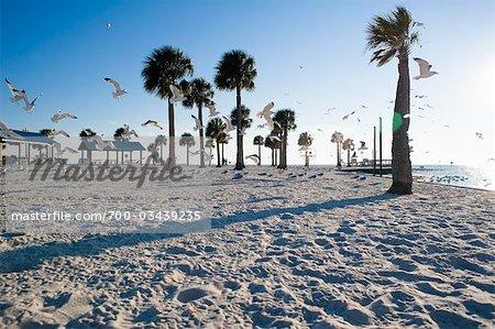Seagulls At Beach Hudson Florida Usa Stock Photo
