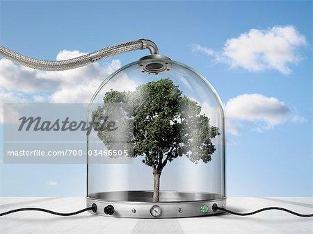 Tree inside Pressurized Glass Dome
