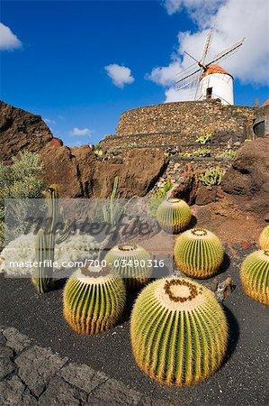 Windmill and Jardin de Cactus, Guatiza, Lanzarote, Canary Islands, Spain