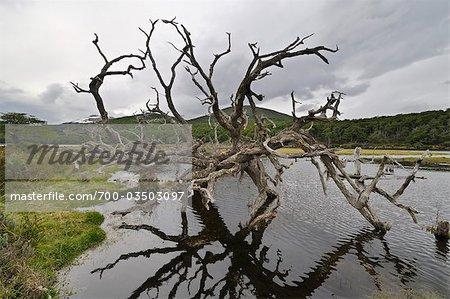 Dead Tree in Water, Ushuaia, Tierra Del Fuego, Argentina, South America