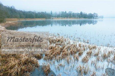 Reeds, Loch Achray, Trossachs, Stirling, Scotland, United Kingdom