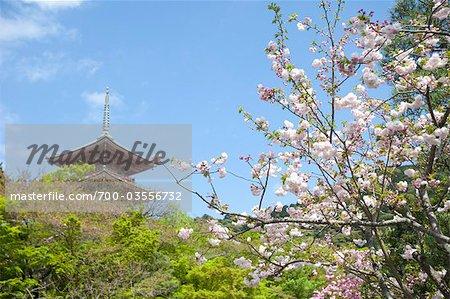 Cherry Blossom, Kiyomizu Temple, Kyoto, Kyoto Prefecture, Kansai Region, Honshu, Japan