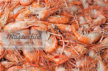 Boiled Shrimp at Don Hoi Lot Market, Samut Songkhram Province, Thailand