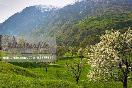 Countryside, Slovenia