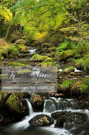 Stream, Snowdonia National Park, Wales