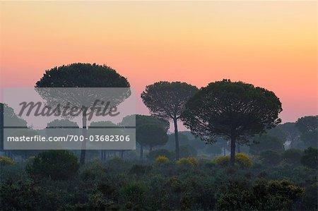 Donana National Park at Sunrise, Huelva Province, Andalucia, Spain