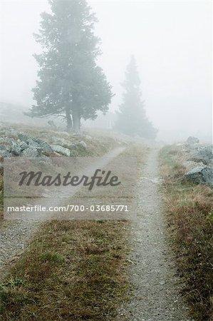 Mist Over Path, Sweden