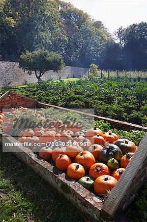 Harvested Pumpkins on Farm