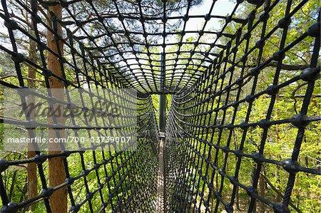 Canopy Walkway, Biosphaerenhaus, Fischbach bei Dahn, Pfaelzerwald, Rhineland-Palatinate, Germany