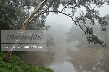 Yarra River, Yarra Bend Park, Melbourne, Victoria, Australia
