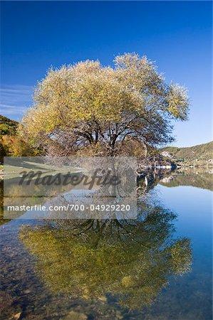 Reflection of Tree in Lago del Turano, Province of Rieti, Lazio, Italy
