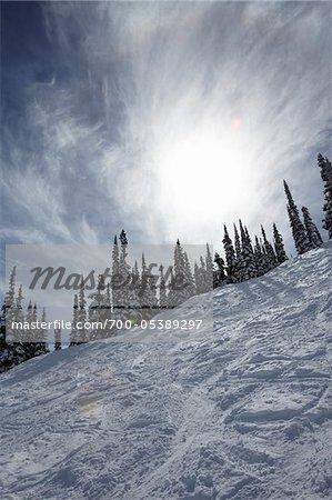 Ski Tracks and Snow-Covered Trees, Whistler Mountain, Whistler, British Columbia, Canada