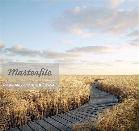 Boardwalk Through Wheat Field, Itasca, Texas, USA