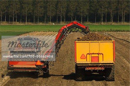 Potato Harverst, Kamperland, Zeeland, Netherlands