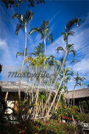 Palm Trees at Ryukyu Mura, Onna, Okinawa, Ryukyu Islands, Japan