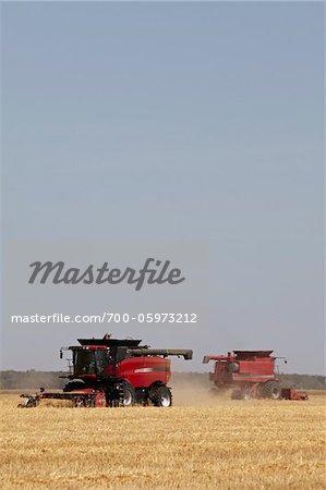 Combines Harvesting Oats, Starbuck, Manitoba, Canada
