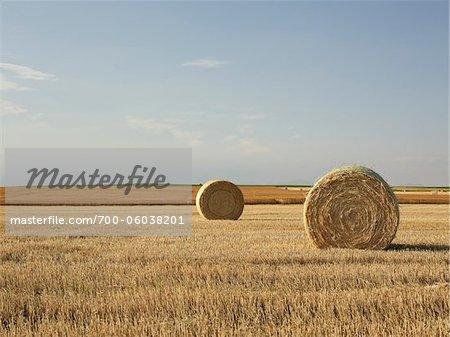 Hay Bales in Partially Harvested Prairie Wheat Field, Pincher Creek, Alberta, Canada