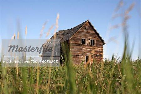 Old Abandoned Wooden Barn in Grassy Field, Pincher Creek, Alberta, Canada
