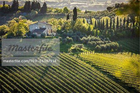 Farmhouse and Vineyard, San Gimignano, Siena Province, Tuscany, Italy