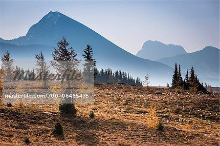 Trees and Sparse Vegetation in Autumn, Mount Assiniboine Provincial Park, British Columbia, Canada