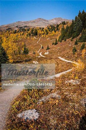 Rock Isle Trail in Autumn, Sunshine Meadows, Mount Assiniboine Provincial Park, British Columbia, Canada