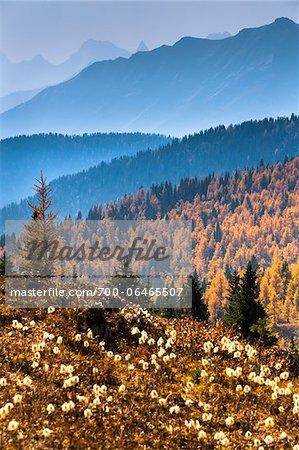 Mountain Range and Autumn Larch Along Rock Isle Trail, Sunshine Meadows, Mount Assiniboine Provincial Park, British Columbia, Canada