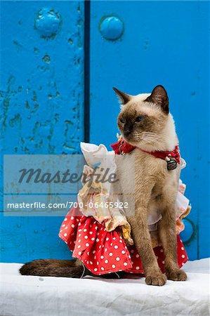 Cat Wearing Costume Sitting in front of Blue Door, Old Havana, Havana, Cuba