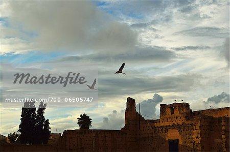 Two White Storks Flying over El Badi Palace, Medina, Marrakesh, Morocco, Africa