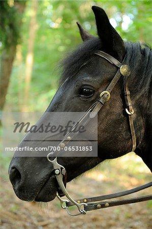 Close-up of Horse, Bavaria, Germany