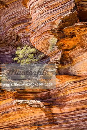 Trees on Rock Ledge, The Loop, Kalbarri National Park, Western Australia, Australia