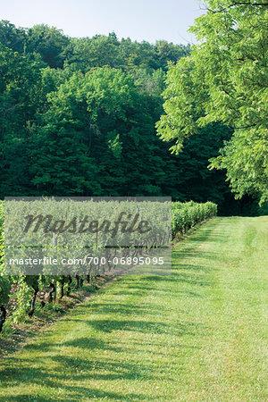 Edge of vineyard on Niagara Escarpment , Niagara Region, Ontario, Canada