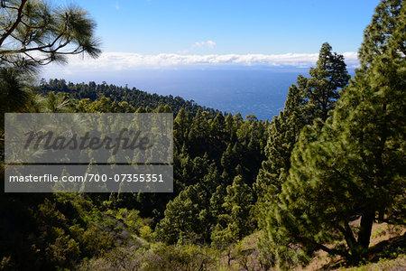Fir Trees on Mountain against Ocean, La Palma, Santa Cruz de Tenerife, Canary Islands