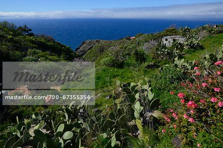 Wild Vegatation on Hill by Sea, La Palma, Santa Cruz de Tenerife, Canary Islands