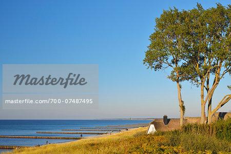 House with Reed Roof on Coast,  Ahrenshoop, Baltic Sea, Fischland-Darss-Zingst, Vorpommern-Rugen, Mecklenburg-Vorpommern, Germany