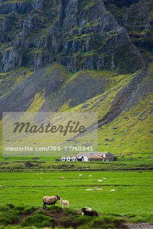 Sheep farm and mountainside view, Skalafell near Hofn, Iceland