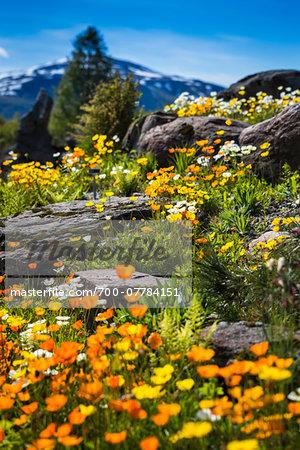 Arctic-Alpine Botanic Garden, Tromso, Norway