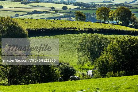 Farmland near Fowey, Cornwall, England, United Kingdom