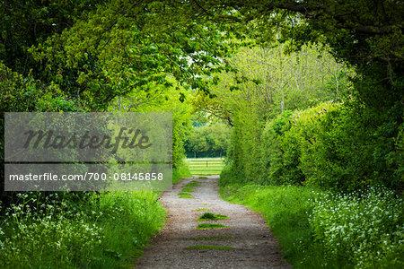 Tree-lined road, Manningtree, Essex, England, United Kingdom