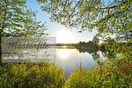 Sunrise on the shoreline on a Lake, Niedernberg, Miltenberg-District, Churfranken, Franconia, Bavaria, Germany