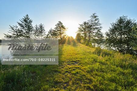 Pathway with Sun in Spring, Niedernberg, Miltenberg-District, Churfranken, Franconia, Bavaria, Germany