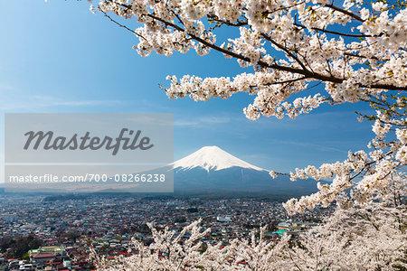 Blooming Cherry Trees over Fujiyoshida in front of Mount Fujji, Yamanashi Prefecture, Japan