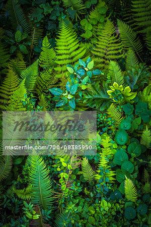 Ferns and Plants, Ubud, Bali, Indonesia